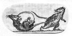 Мифы о животных. Похищение яйца