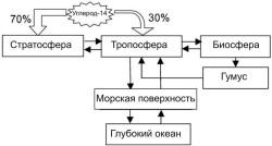 Рис. 2. перераспределение новообразованного углерода-14 между различными резервуарами на Земле