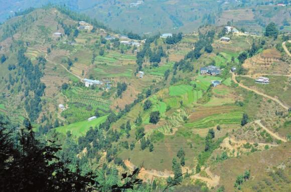 Террасированные склоны холмов в окрестностях Шимлы. Фото А. Андреева