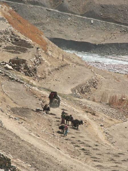Вьючной тропой. Небольшой караван близ деревни Муд. 7 октября 2011 года. Фото С. Литвинчука