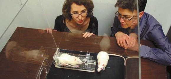 Рис. 1. Чикагские исследователи Инбаль Бен-Ами Бартал (Inbal Ben-Ami Bartal) слева и Пегги Мейсон (Peggy Mason) и их сострадающие крысы (http://mag.uchicago.edu/)
