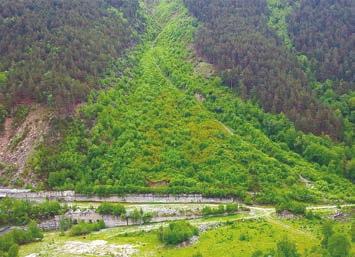 Свежий лес на месте схода лавины, 7 лет спустя