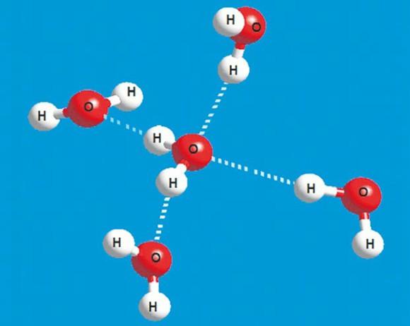 Молекула воды создает четыре водородные связи с другими молекулами. Две связи создает кислород и по одной — атомы водорода. Изображение: А. Калиничев