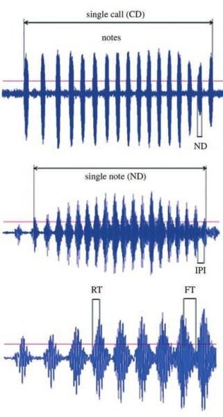 Рис. 2. Характеристики призывного сигнала самца Hyla japonica. CD — длительность сигнала, ND — длительность ноты, RT —время нарастания импульса, FT — время спада импульса, IPI — интервал между звуковыми импульсами. An, Waldman, 2016