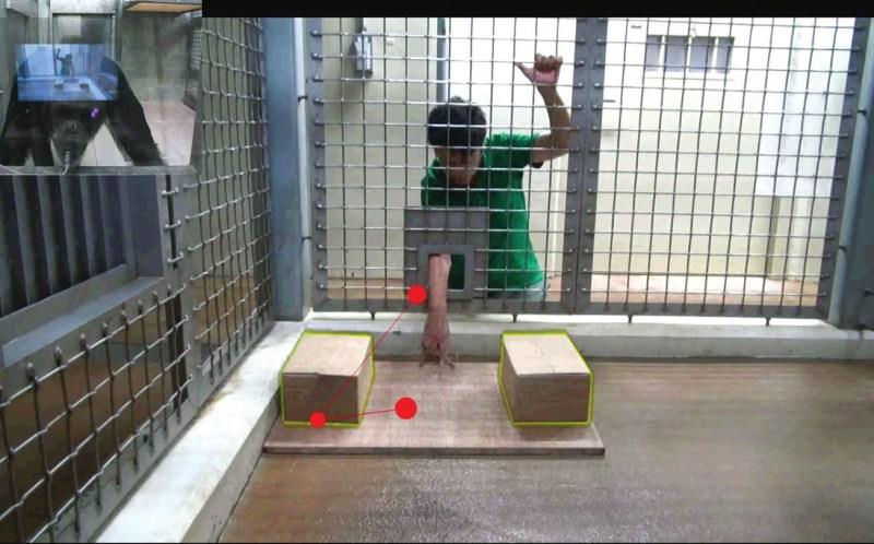 3. Человек собирается подвинуть к себе платформу с двумя ящиками. Обезьяна понимает, что он рассчитывает найти камень под левым ящиком, хотя его давно там нет. Красные кружочки показывают направление взгляда обезьяны (http://theconversation.com)