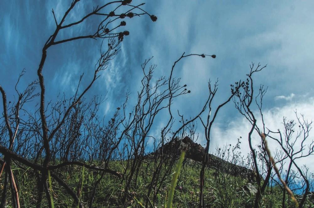 Финбош после пожара