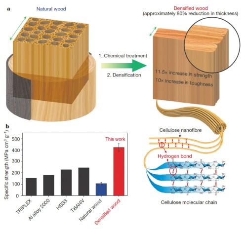 Схема получения нового материала (а) и механические характеристики уплотненной древесины по сравнению с обычной древесиной инекоторыми другими конструкционными материалами. Илл. из [1]