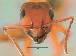 38_ants-2
