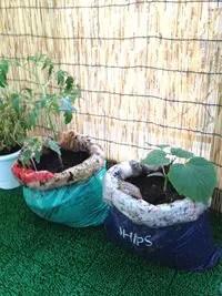 ビニール袋で野菜を作ろう!!