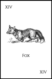 14Fox