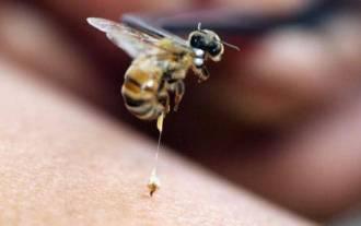 wrinkle treatment cream - bee venom