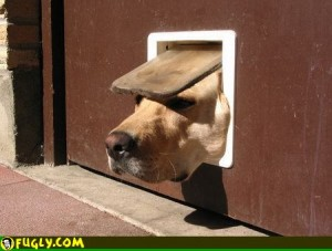 doggie_door_too_small