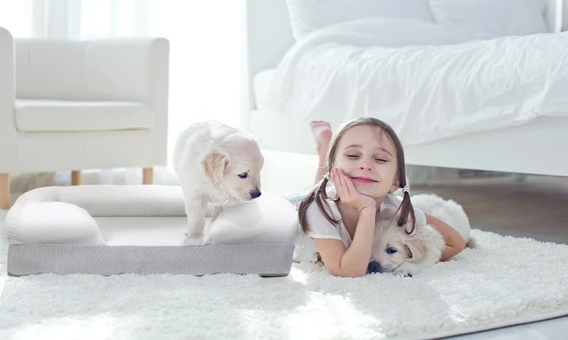 Try Any Mattress of Your Choice RISK-FREE @ Home W/ Free Delivery Puffy_Dog_Bed4_800x Best Orthopedic Dog Bed Reviews