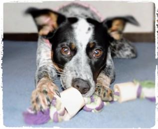 kids n dogs n toys challenge 8