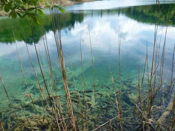 池の水もキレイ!中には魚も:プリトヴィツェ国立公園