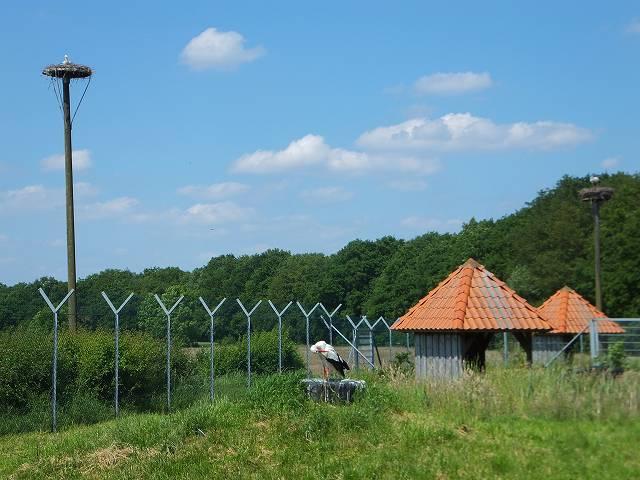コウノトリ保護区:ドイツの公園にて