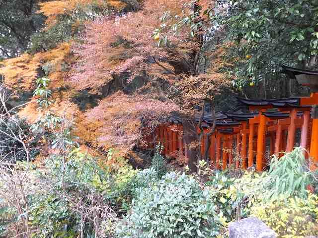 紅葉がキレイなんだろうなぁーと…:伏見稲荷大社