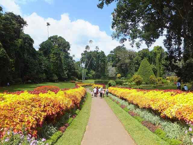 キャンディの植物園内:スリランカ旅行