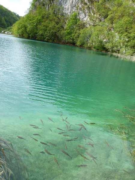 湖の中には魚たちが:プリトヴィツェ国立公園