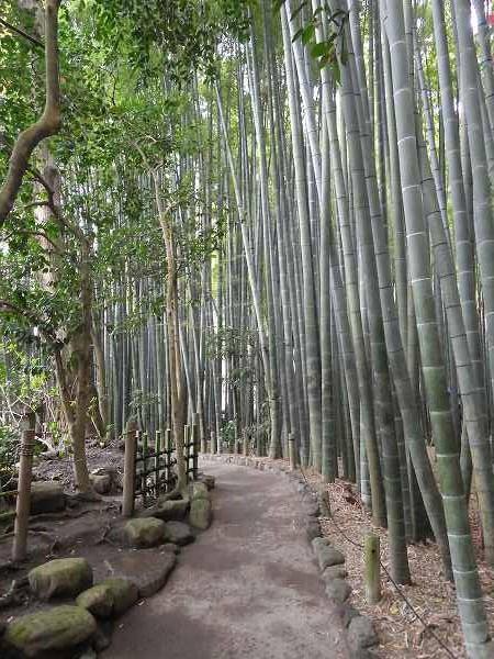報国寺の裏にある竹林の庭