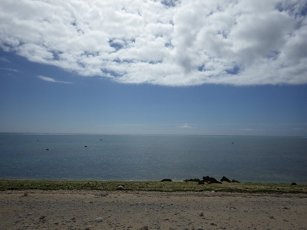 サンゴが沢山ある白保の海:石垣島