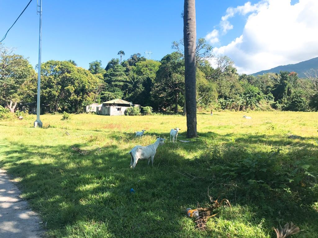 道の途中にヤギがちらほら・プエルトガレラ