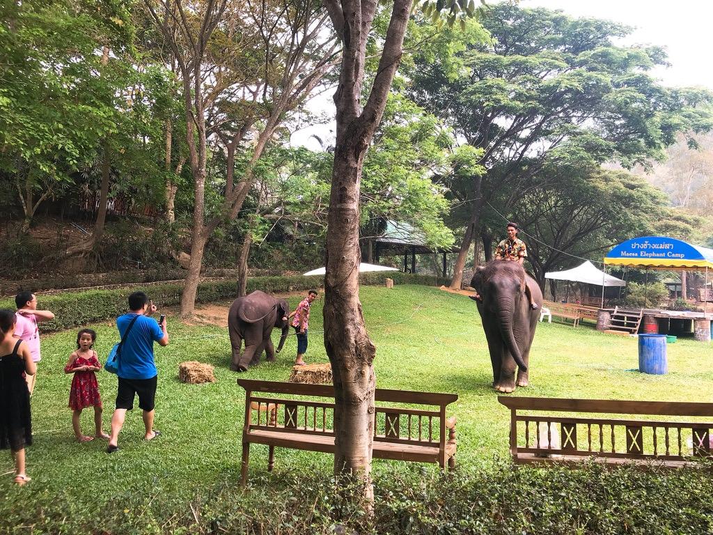 象の子どもたち・メーサーエレファントキャンプ
