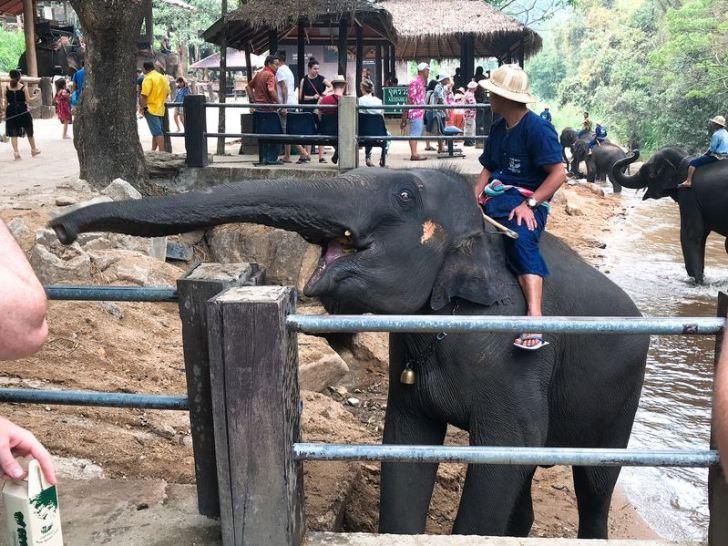 象の怖い顔!メーサー・エレファントキャンプ:チェンマイ旅行