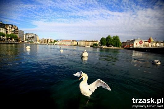 Jezioro Genewskie Genewa