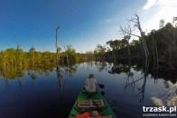 Zielone płuca Ziemi. Amazoński las.