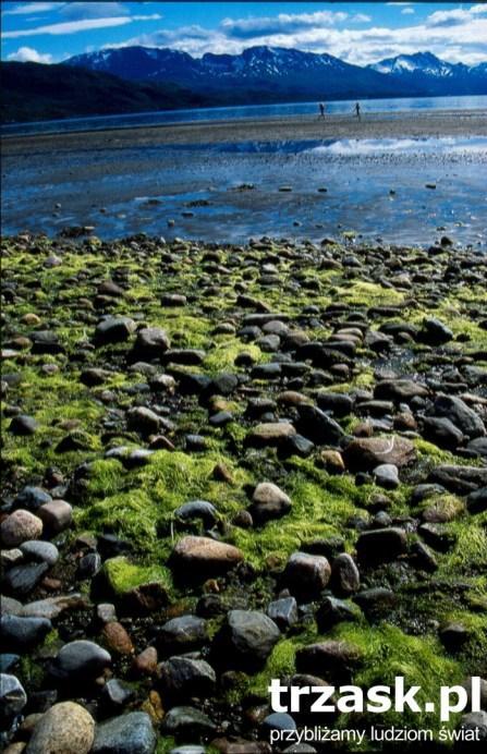 Beach near Narvik