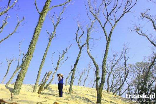 Wydmy pochłaniające las w Słowińskim Parku Narodowym