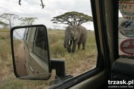 Słoniątko na wyciągnięcie ręki- Serengeti