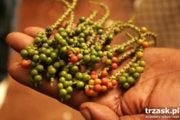 Tam gdzie pieprz rośnie... czyli Zanzibar