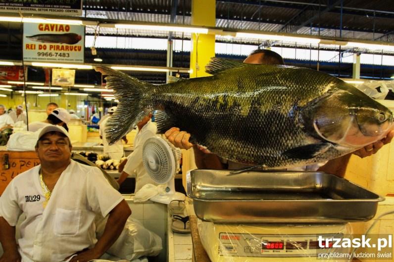 Fish Market in Manaus