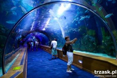 Oceanarium w Walencji