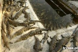 Farma krokodyli, na południu Etiopii