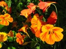 Virágok 1.