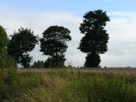 Nyári fák