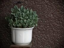 növények az erkélyen - képeslap szekció