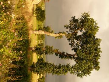 Fák nyáron