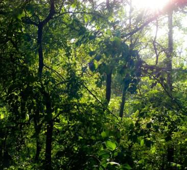 Napsütés, erdő