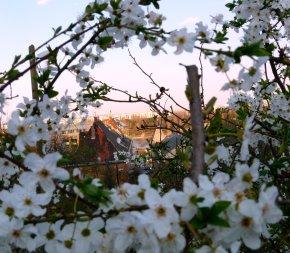 Virágos Budapest