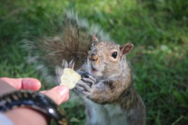 Mókus etetés - Nourir les ecureuil