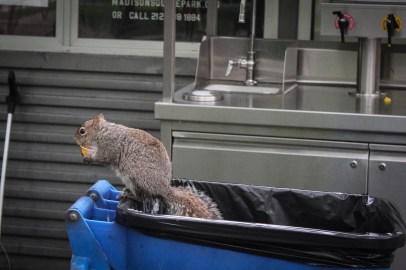 Guberáló mókus - Ecureuil