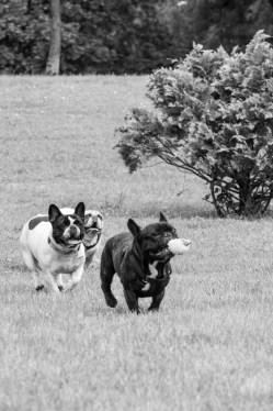 bulldog piknik-0809