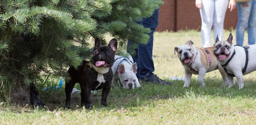 bulldog piknik-0839