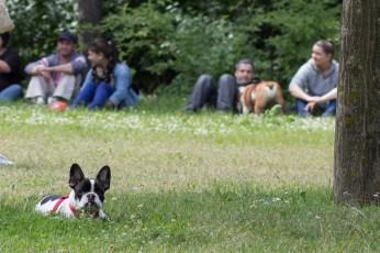 bulldog piknik-0850