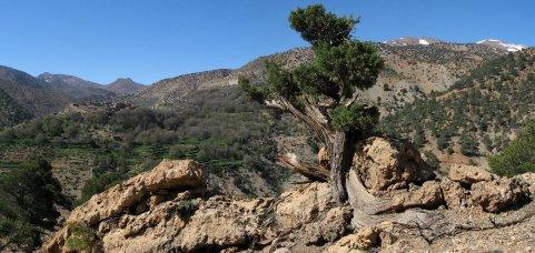 IMG_5227_pano-toufghine-arbre