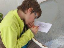 Gaspard dessine les otaries et pélicans vus le matin